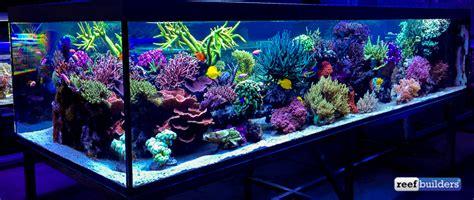 the supernatural reef tank of seabox aquarium reef builders the reef and marine aquarium