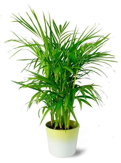 d 233 coration salle de bain 224 l aide d utiles et belles plantes d int 233 rieur design feria