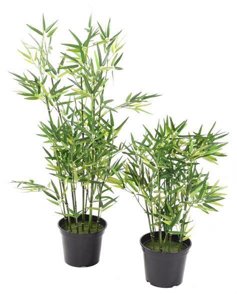 plante d ornement exterieur 28 images plante aquatique jetez vous 224 l eau en 47 photos