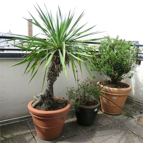 3 plantes dexterieur en pot rond dont 1 de 40 cm de