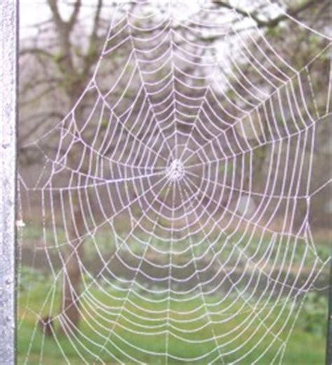 pourquoi les toiles d araign 233 es sont elles si r 233 sistantes
