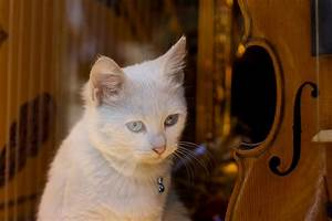 Cats don't like human music — play them this instead | PBS ...