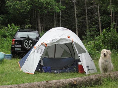 6 Dogfriendly Camping Sites Near Jackson
