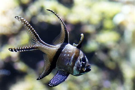 reportage photo a l aquarium de la rochelle photographe professionnel vend 233 e 85