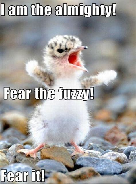 30 Funny animal captions   part 5 (30 pics)   Amazing Creatures