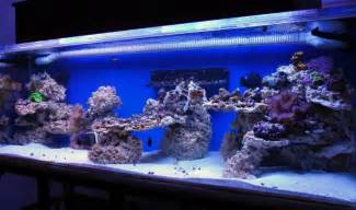 how to drill live rock reef central community my aquascape live rock