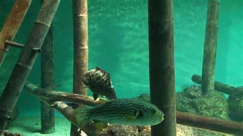 vend 233 e talmont st hilaire aquarium le 7continent de raymond grelet
