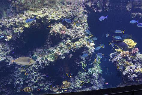 admirez les poissons du mus 233 e oc 233 anographique de monaco