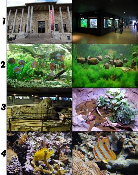 aquarium de la porte dor 233 e les parcs d attractions fran 231 ais