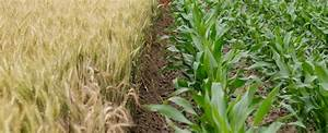 Genetically Engineered Crops & GMOs | Green America