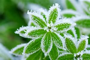 Sind Ranunkeln Winterhart : winterharte pflanzen diese pflanzen berleben die kalte jahreszeit unbeschadet ~ Markanthonyermac.com Haus und Dekorationen