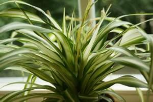 Palmen Für Die Wohnung : pflanzen f r das schlafzimmer welche zimmerpflanzen eignen sich ~ Markanthonyermac.com Haus und Dekorationen