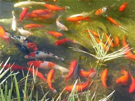 nouvelle aquarium gal 232 re forum aquariophilie wamiz