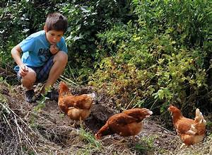Hühner Im Garten : unsere h hner ~ Markanthonyermac.com Haus und Dekorationen