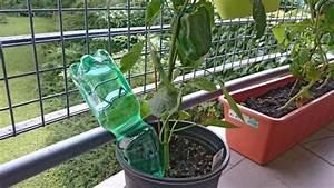 Pflanzen Bewässern Mit Plastikflasche : blumen gie en im urlaub so einfach ist es wirklich anleitung ~ Markanthonyermac.com Haus und Dekorationen