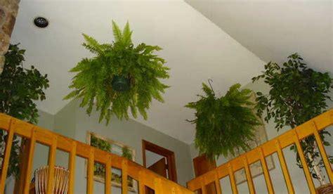 9 plantes d int 233 rieur qui nettoient l air et qui sont quasi increvables