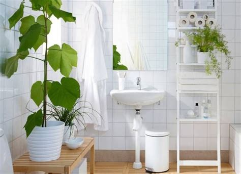 25 best ideas about bathroom plants on plants in bathroom indoor plants low light