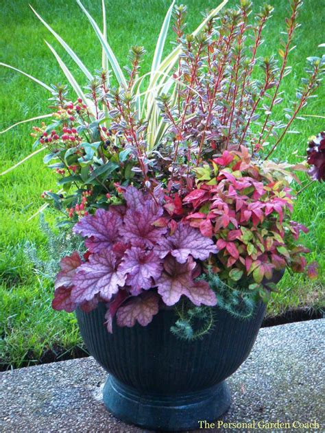 The 22 Best Images About Perennial Container Garden Ideas