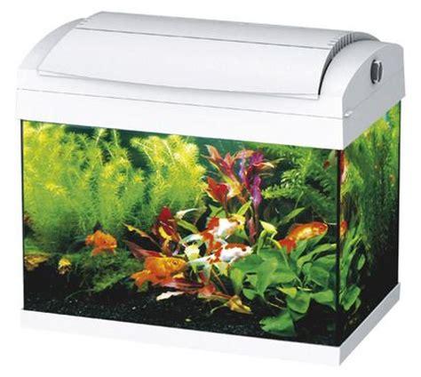 17 meilleures id 233 es 224 propos de aquarium pour poisson sur poisson