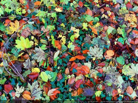 explosion de couleurs automnales tapis de feuilles mortes un apr 232 s midi d automne juste apr 232 s