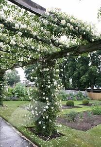 Kletterpflanzen Immergrün Winterhart : die besten 25 kletterpflanzen immergr n ideen auf pinterest gartenschlauch immergr ne ~ Markanthonyermac.com Haus und Dekorationen