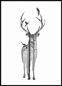 Tierbilder Schwarz Weiß : schwarz wei poster mit hirsch poster und plakate mit naturmotiven poster online ~ Markanthonyermac.com Haus und Dekorationen