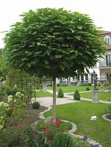 Kleine Bäume Für Den Garten : b ume f r kleine g rten garten pinterest ~ Markanthonyermac.com Haus und Dekorationen