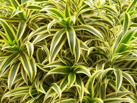 plante d 233 polluante 10 plantes d 233 polluantes pour votre int 233 rieur pratique fr