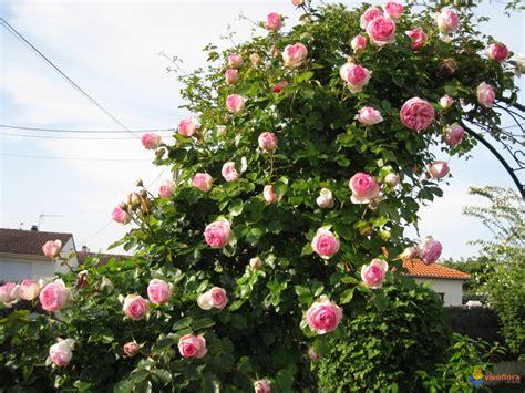 arceau pour rosier grimpant fleurance
