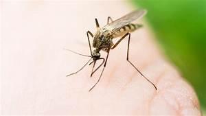 Mücken Im Haus Was Tun : m cken so bek mpfen sie stechm cken in haus und garten ~ Markanthonyermac.com Haus und Dekorationen