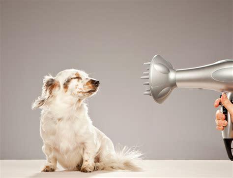 comment toiletter chien je commence par un mini check up femme actuelle