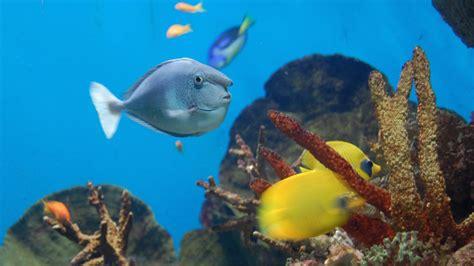 aquarium de barcelone barcelone r 233 servez des tickets pour votre visite getyourguide fr