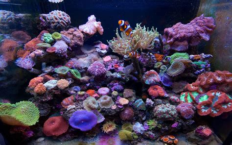 marine aquarium hd desktop wallpapers 7wallpapers net