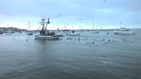 Flying Fish Boat Youtube by Seagulls And Pelicans Flying Behind A Fishing Boat Youtube