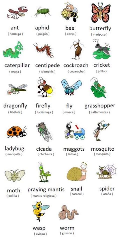 Learn The Names Of Insects In English And Spanish  Galway Language School