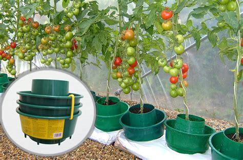 arrosage tomate en pot fleurbleue