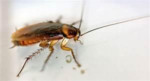 Mücken Im Haus Was Tun : sch dlinge in lebensmitteln was tun apotheken umschau ~ Markanthonyermac.com Haus und Dekorationen