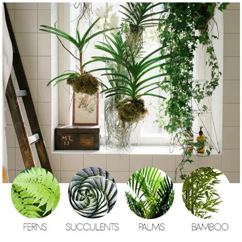 turn your bathroom into an oasis with these indoor bathroom plants decoration