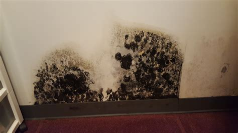 Black Mold VS Asbestos The Battle of Toxic Materials