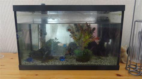 installation de mon premier aquarium