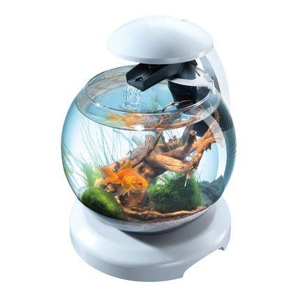installation aquarium pour poisson combattant pas cher