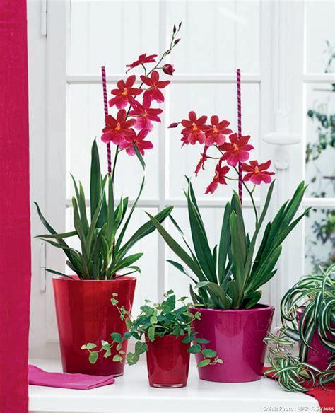 plantes d int 233 rieur plante verte int 233 rieur d 233 tente jardin