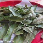 Lorbeer Gelbe Blätter : gew rz lorbeer pflanzen pflegen ernten berwintern gartenmoni altes wissen bewahren ~ Markanthonyermac.com Haus und Dekorationen