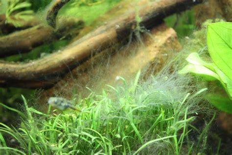 probl 232 me d algues dans l aquarium page 5