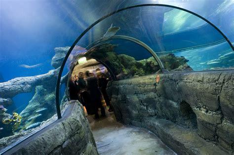 visiting the sea aquarium backpackers hostel